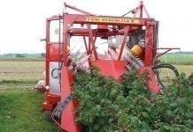 Perspektywy mechanicznego zbioru owoców pestkowych i jagodowych