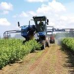 Pokazy maszyn na plantacjach porzeczek