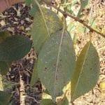 Drzewa pestkowe i ziarnkowe we wrześniu i pod koniec sezonu wegetacyjnego