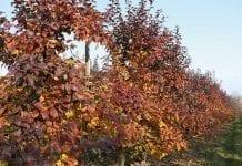 Dokarmianie sadów po zbiorach owoców