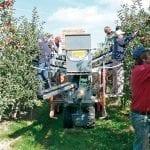Mechaniczny zbiór jabłek i gruszek