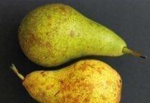 Czy można poprawić jakość jabłek i gruszek podczas przechowywania?