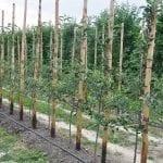 Konstrukcje, rusztowania isieci antygradowe wuprawach sadowniczych