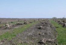 Przygotowanie kwatery do sadzenia drzewek