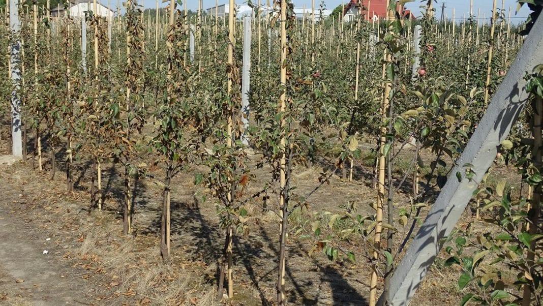 Rusza nabór wniosków na dofinansowanie nawadniania gospodarstw