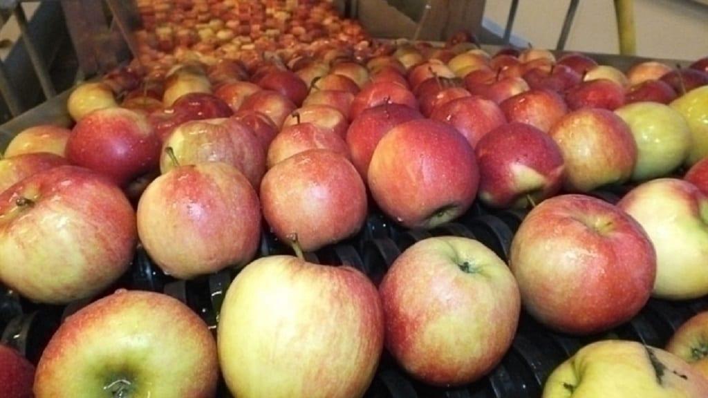 Zapasy jabłek według WAPA