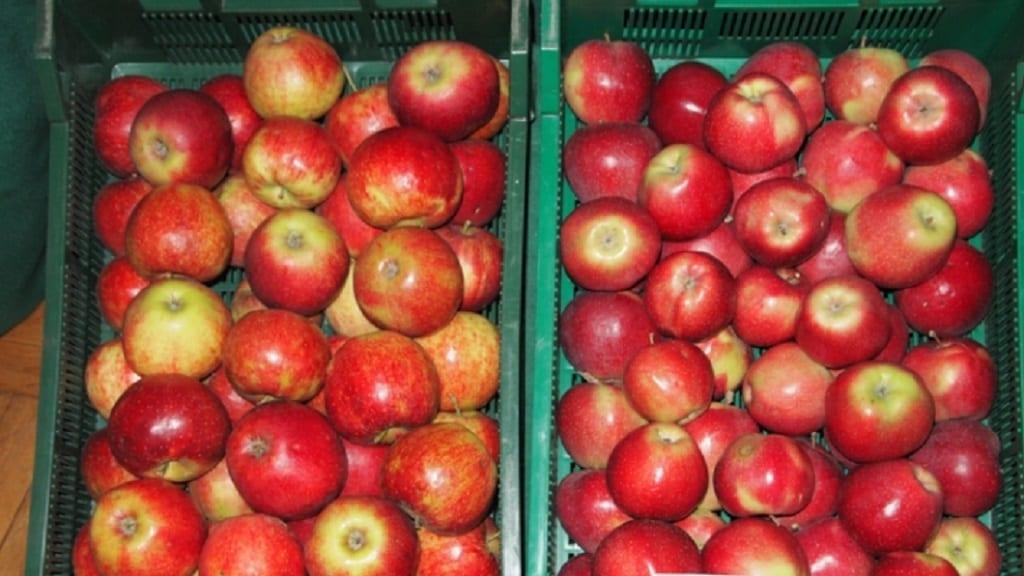 Rosjanie w produkcji jabłek wciąż dalecy są od samowystarczalności