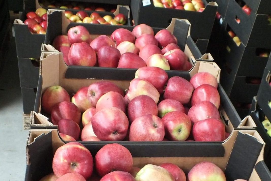 Eksport jabłek do USA już w tym sezonie? Amerykanie przyjadą na kontrolę