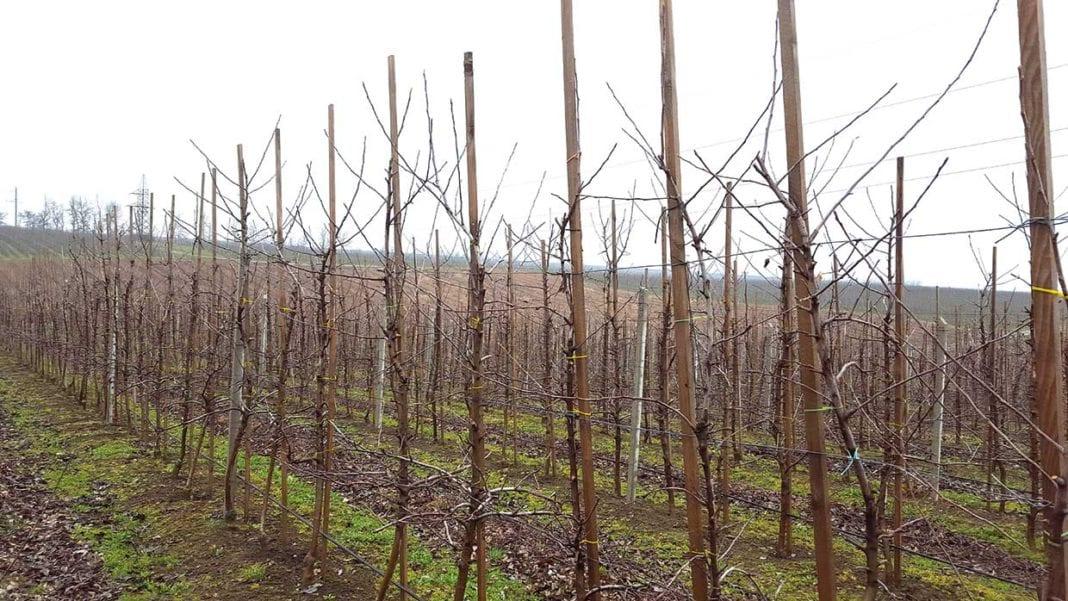 """Uzbekistan: akcja """"Sadzimy milion drzew owocowych"""" wystartuje wiosną 2020 roku"""
