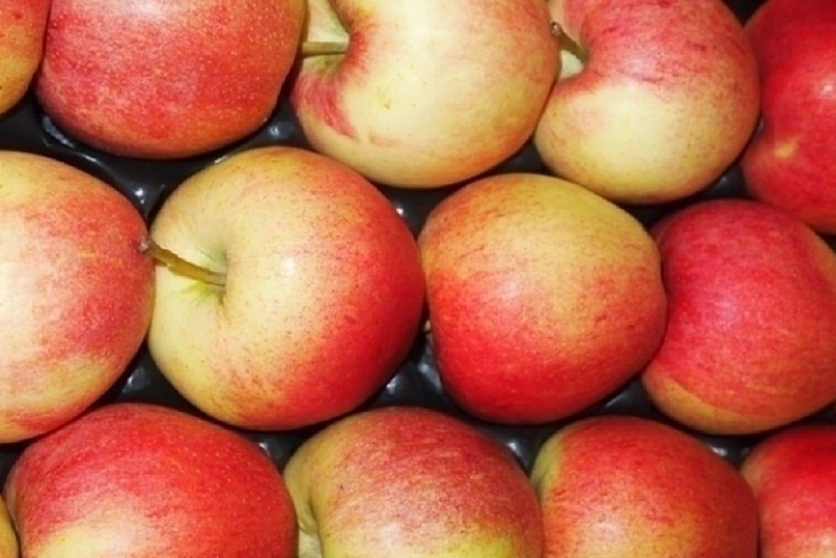 Czy polskie jabłka wrócą do Rosji?