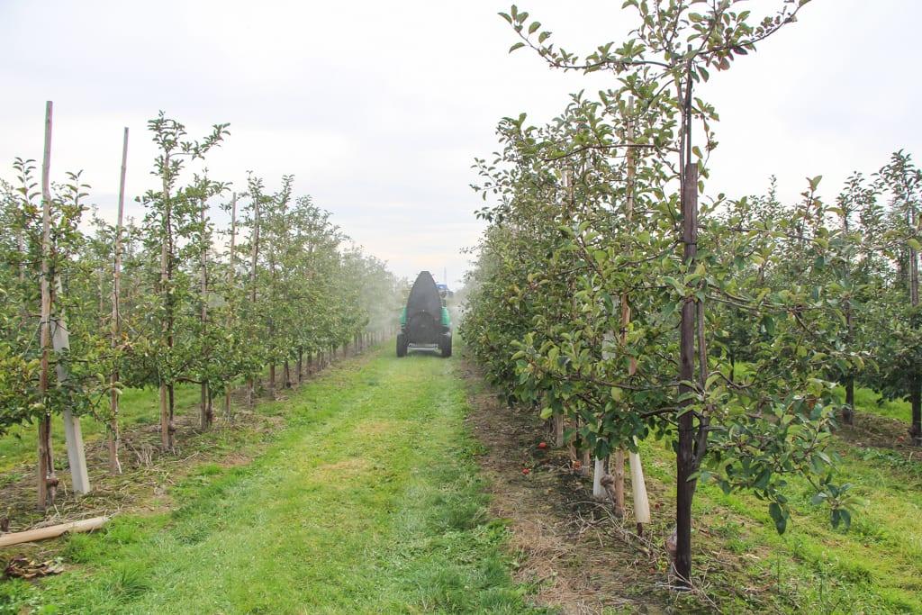 Opryskiwacz w sadzie - zabiegi ochrony