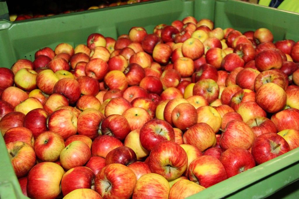 Czescy producenci owoców chcą ściślejszej kontroli polskich jabłek