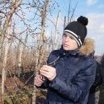 W sadzie produkcyjnym zimą