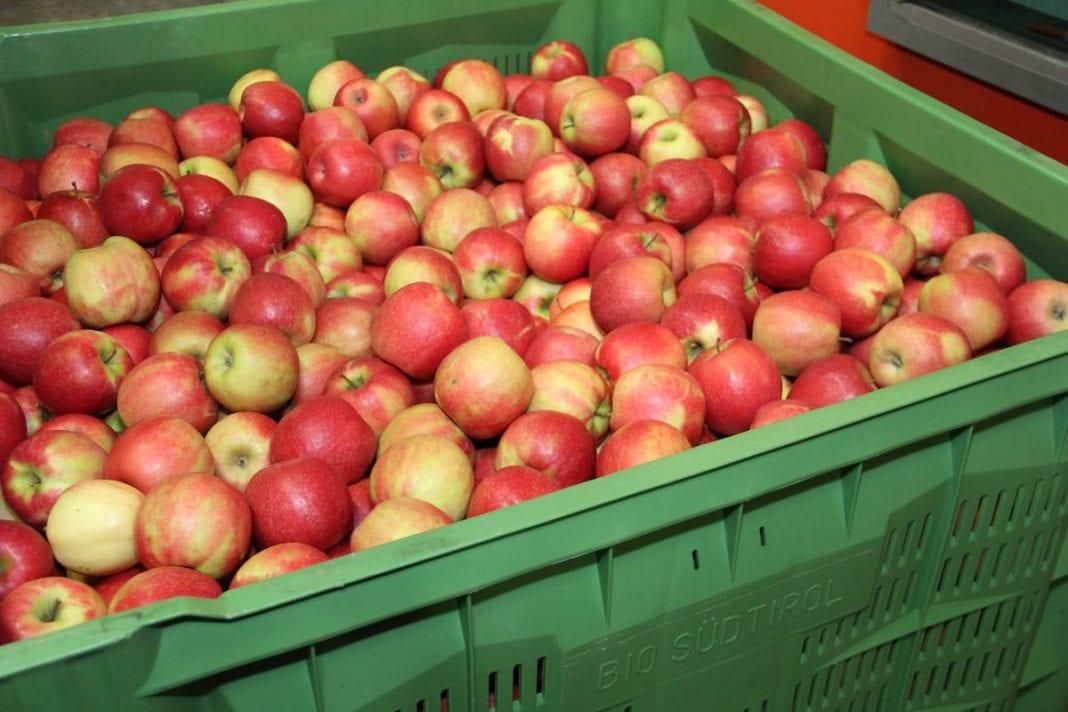 Stany magazynowe jabłek na dzień 1.11.2019