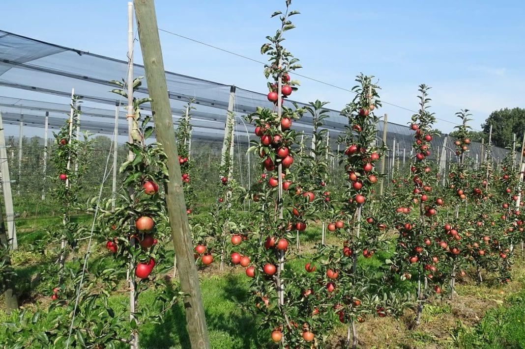 Zanim parch jabłoni zaatakuje