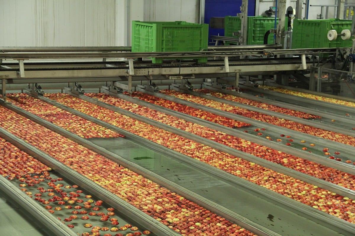Kończą się jabłka w Holandii. Jakie ceny?