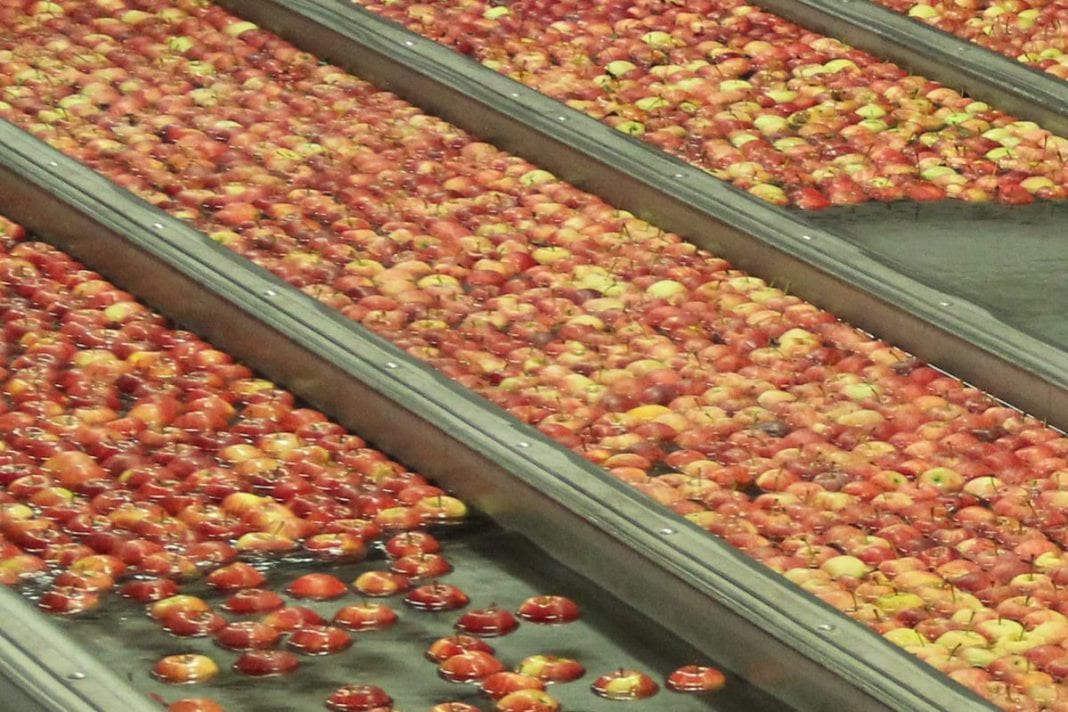 Na Ukrainie drogie jabłka. Jaki wpływ towaru z Polski?