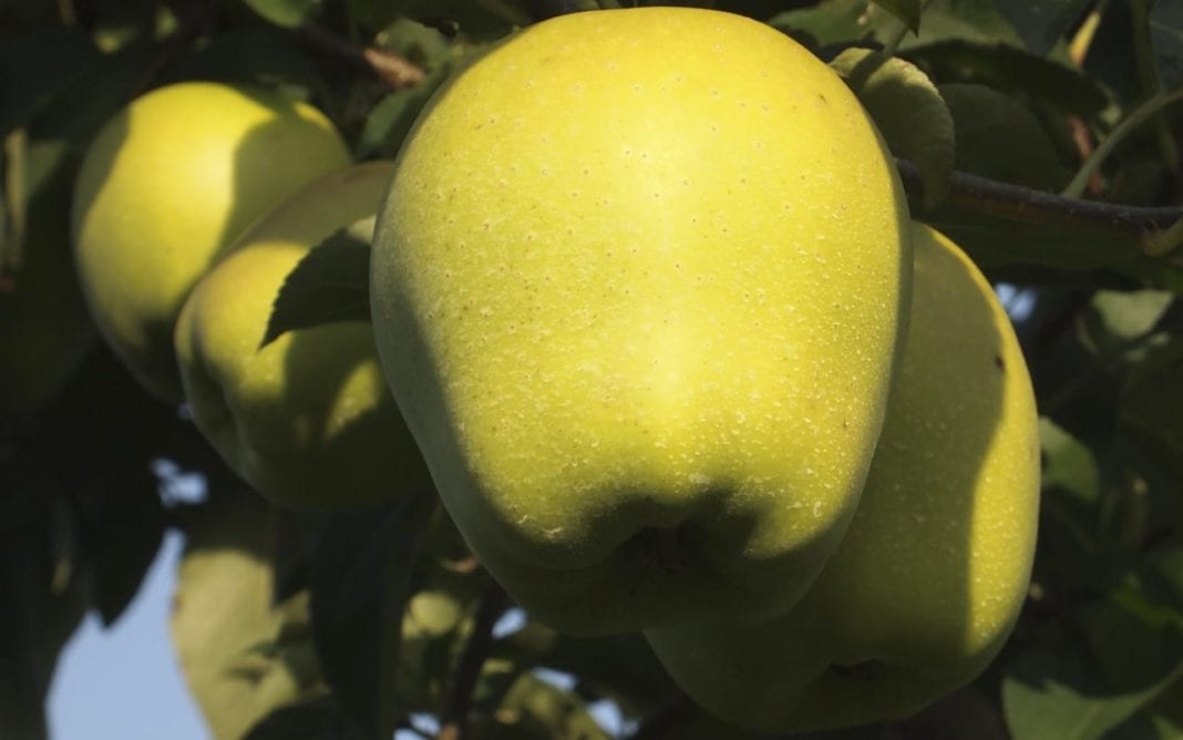 Mołdawskie Jabłka
