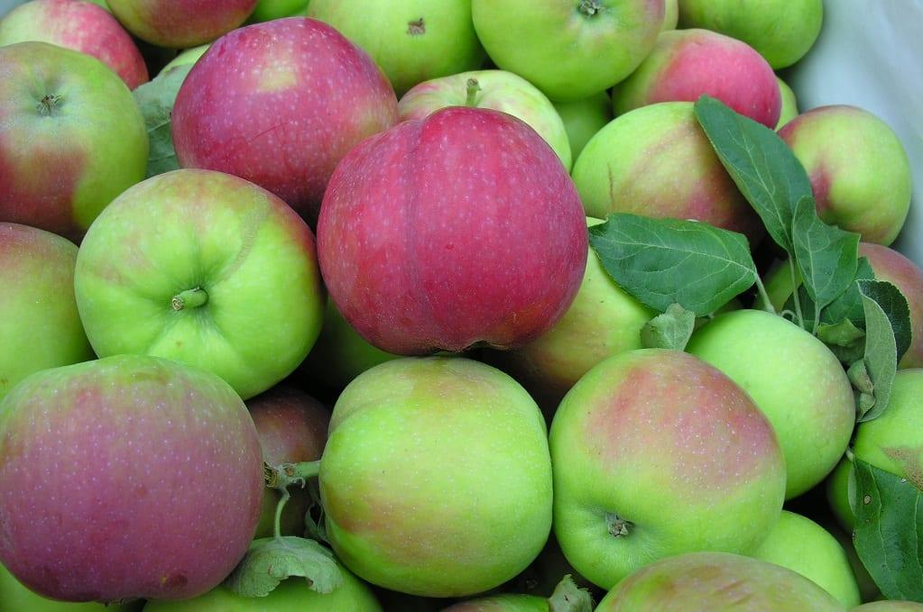 W Broniszach są już tegoroczne jabłka, ale mało jest brzoskwiń, moreli i wiśni