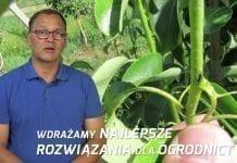 Komunikat sadowniczy – zalecenia PROCAM z 05.07.2017