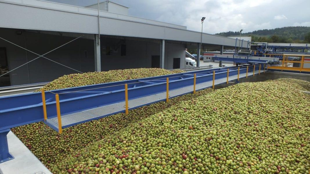 Ceny skupu jabłek przemysłowych