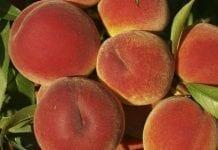 Brzoskwinie i nektarynki. Jak wygląda europejski rynek?