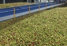 Po zawale – stały, powolny wzrost cen jabłek dla przetwórstwa