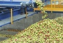 Rekordowy 2018 rok i klęska urodzaju jabłek?