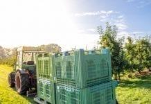 Drogie jabłka na południu Niemiec; najniższe zbiory od zjednoczenia