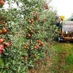 Nowości w mechanizacji sadownictwa (cz. I)