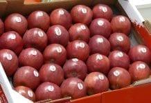 Europa: Ceny jabłek we wrześniu. Gdzie były najwyższe?