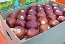 Światowy eksport jabłek. Jak wypada Polska?