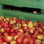Wschód: Dość stabilne ceny jabłek w listopadzie