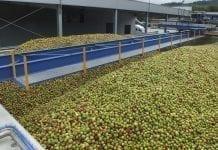 Jabłka przemysłowe: jeszcze nieco w górę