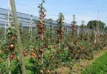 Polska powinna podnieść prestiż zawodu rolnika, by zapewnić bezpieczeństwo żywnościowe