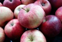 Jabłka odmiany Alwa