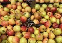 Jabłka słabej jakości