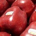 Koronawirus we Włoszech – czy zaburzy handel jabłkami?