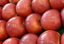 USA: zbiory jabłek wyższe niż oczekiwano