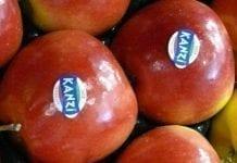 Jabłka klubowe. Jakie prognozy do 2020 r.?