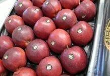 W Holandii mało jabłek. Jakie ceny?