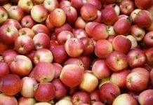 Gotówka za jabłka po sortowaniu