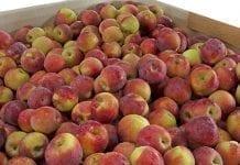 Hurtowe ceny jabłek i gruszek 13 – 15 marca