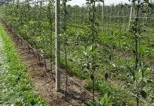 Zmęczenie gleby, choroba replantacyjna. Co wiemy o tym zjawisku?