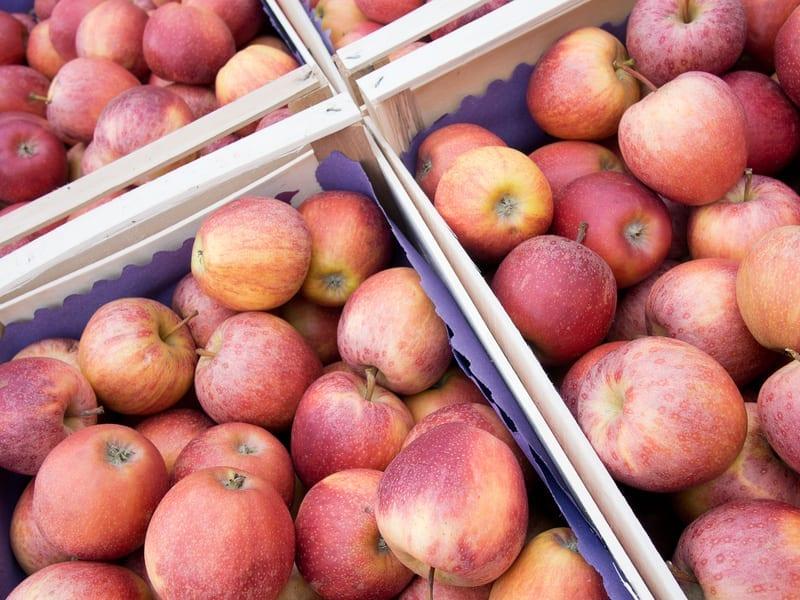 Indie otwarte dla ukraińskich jabłek