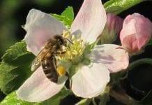 UE zakaże stosowania trzech neonikotynoidów szkodliwych dla pszczół