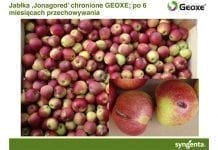 Jabłka wolne od chorób przechowalniczych