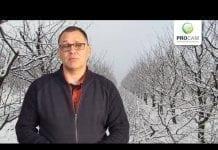 Komunikat sadowniczy PROCAM z 28.03.2018
