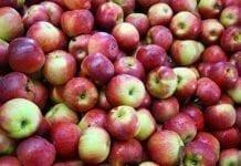 Rynek Kostaryki dla polskich jabłek już otwarty