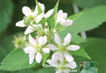 """W kwietniowym """"TMJ"""" – wiosna na jagodowych plantacjach"""